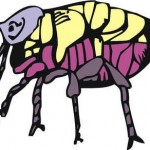 Controlling Fleas In Your Home
