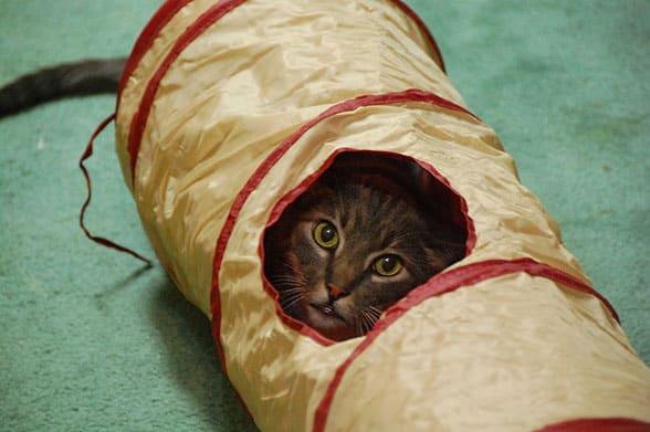 tunnel-linus