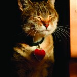 Arm & Hammer Offers Free Cat ID Tag