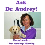 Ask Dr. Audrey: My Cat Has Continuing Urinary Problems!