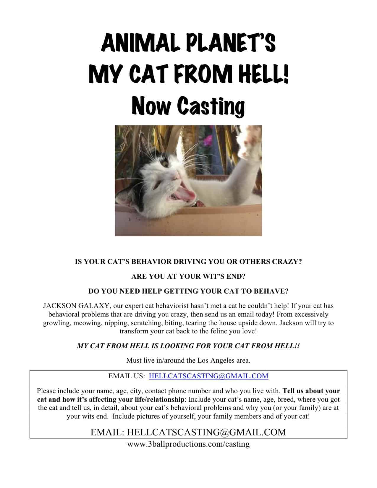 Casting call for my cat from hell cattipper for Jackson galaxy phone number