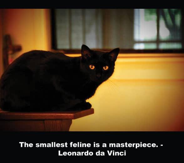 Cat Quotes: Leonardo da Vinci