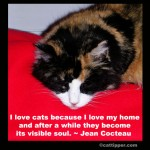 Famous Cat Quotes: Jean Cocteau