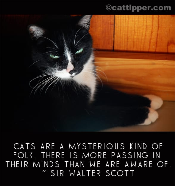 Quotations About Dogs And Cats
