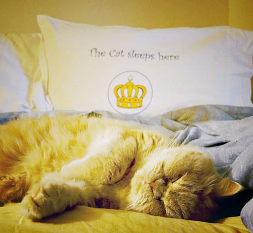 Dog SnorZ Pillowcases for Cat Lovers!