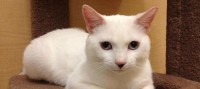Adoptable Cat of the Week: Jerry in Florida #AmazingPetExpo