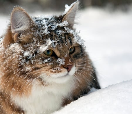 What Warm Food Will Cats Eat