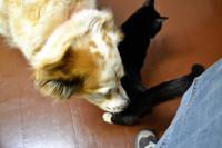 tiki-lucky-sniffing-tail