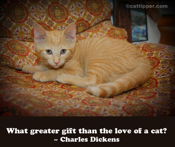 quote-cat-dickens