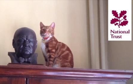 Croydon Animal Samaritans Cats