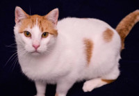 Cameron-a-special-needs-cat-in-Wisconsin