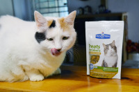 Coco's Weight Loss with #HillsPet Metabolic Diet
