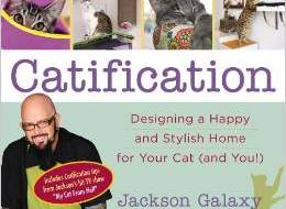 Catification