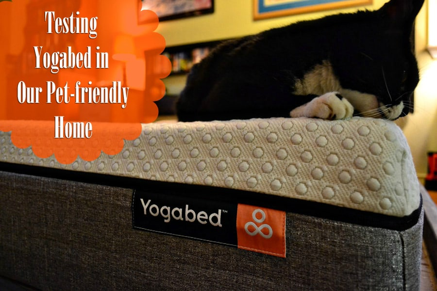 Testing Yogabed in Our Pet-Friendly Home