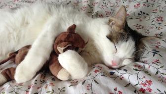 cat-289591_1280