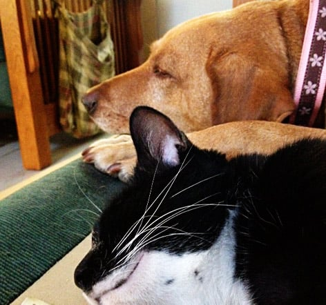 How to bring a new cat to your dog household Can a dog tell if another dog is sick