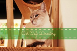 cat-cafe-directory-large