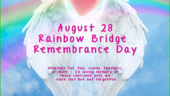 RainbowBridge-Web-2