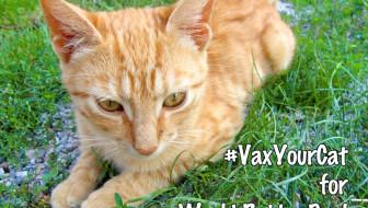 vaxyourcat