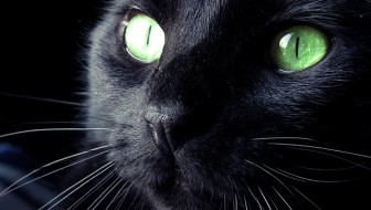 National Black Cat Day