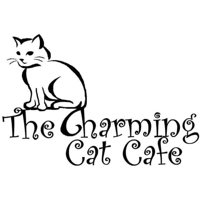 Lewisville cat cafe: Charming Cat