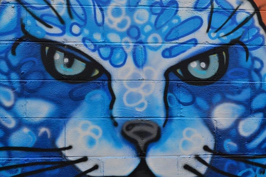 blue-cat-cafe