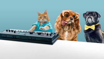Keyboard Cat Joins Other Internet Stars for #StartAStoryAdopt
