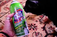 Cleaning Pet Stains and Keeping Your Home Smelling Fresh
