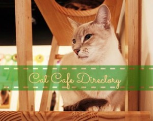The Cat Cafe Directory