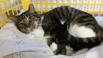 #PawPromise Adoptable Cat of the Week: Leonora