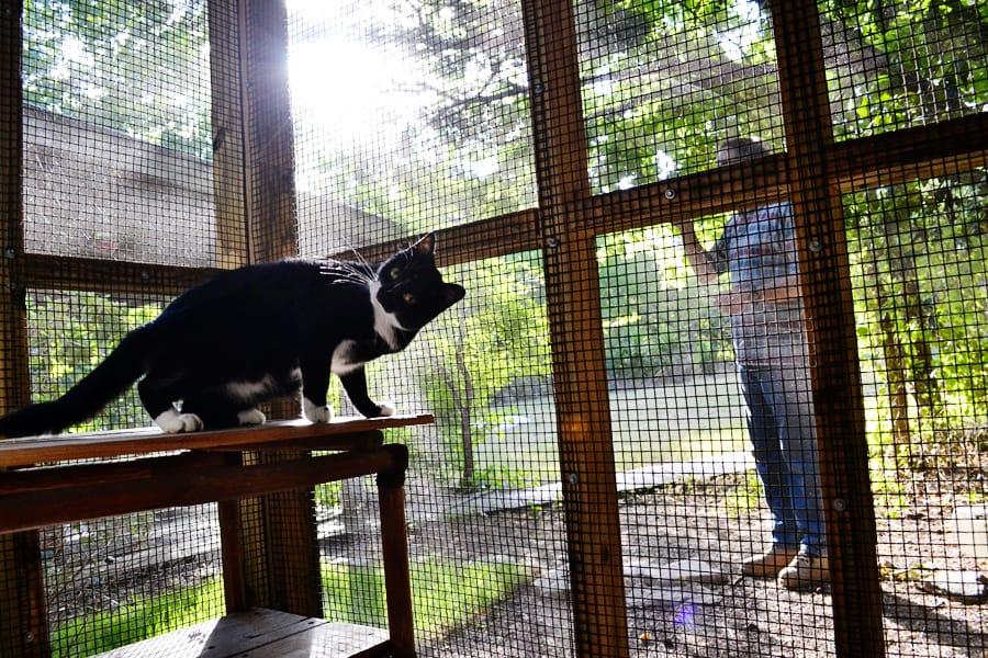 Birds Need Grain – Cats Do Not