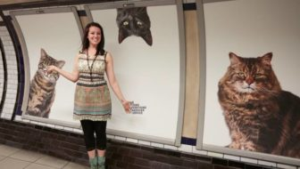 London Station Displays Adoptable Cat Posters