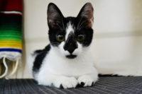 Meet Ochi – Our New Kitten!