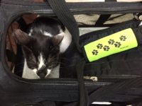 Adopting? How to Transport Your Cat Home from the Shelter