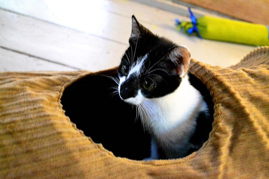 cat tunnel-ochi-tunnel-closeup2