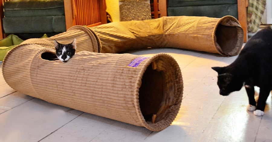 cat tunnel-tunnel2