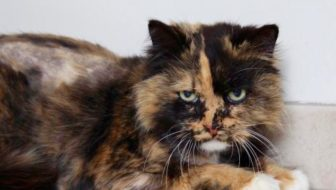 Adoptable Cat of the Week: Miss Priss in Minnesota