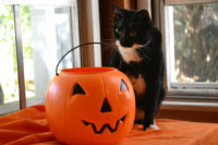 10 Tips for Keeping Your Cat Safe this Halloween