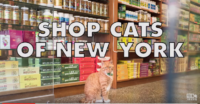 "Don't Miss ""Shop Cats of New York"""
