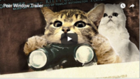 Video Created to Calm Cats Who Fear Fireworks