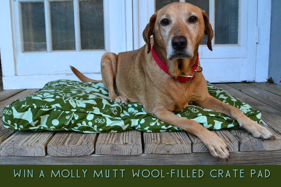 molly-mutt-cover