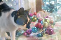 Ochi's First Christmas Tree