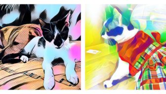 Fun with Photo Apps! Fido + Fluffy's #FreebieFriday