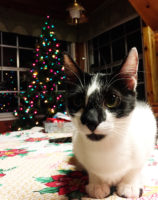 Wordless Wednesday: Ochi's First Christmas Tree