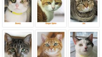 We're Sponsoring a Shelter Cat Kennel!