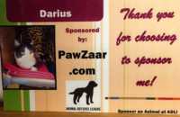 Meet Darius! Your purchases have sponsored his shelter kennel!