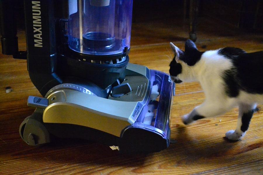 Review: Eureka Ultimate Clean Pet Vacuum Cleaner