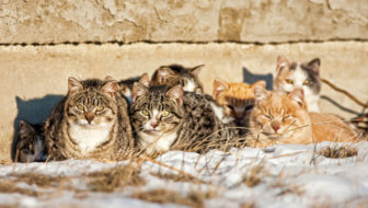 Helping Feral Cat Colonies During the Winter Months