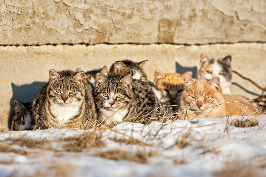 Helping Feral Cat Colonies During the Winter Months-CatTipper on squirrel home, chipmunk home, fast cat home, ferret home, mountain lion home, lizard home, duck home, pet cat home, dog cat home, stray cat home, cat lady home, pig cat home,