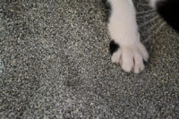 Does Your Litterbox Stink? 6 Ways to Help This Summer